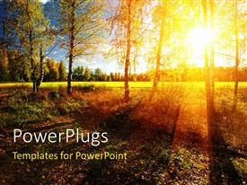 Audience pleasing PPT theme featuring a number of trees with sunshine