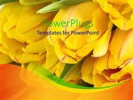 Elegant presentation theme enhanced with a number of yellow tulips with blurred background