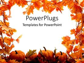 Audience pleasing PPT theme featuring orange pumpkins and leaves for autumn festival holidays on a white background