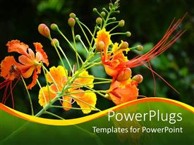 Colorful presentation design having orchid with yellow orange flowers, Greenery dominance