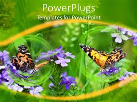 Presentation theme featuring a pair of butterflies along with a beautiful floral background