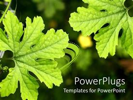 Presentation design with a pair of leaves with blurred background with a place for text