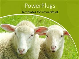 Audience pleasing PPT theme featuring a pair of sheep with greenery in the background