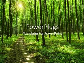 Audience pleasing PPT layouts featuring path in green forest with huge trees and sunlight