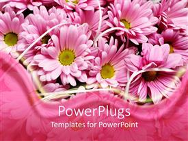 Presentation theme having pink daisy flowers with pink wave border