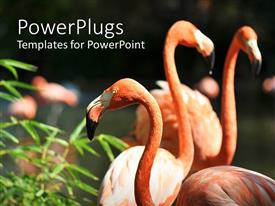 Beautiful PPT layouts with pink flamingos with green plant in the sun
