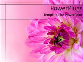 Presentation theme consisting of a pink flower blossoming with its reflection in the background