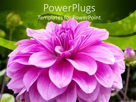 Colorful PPT theme having a pink flower with green background