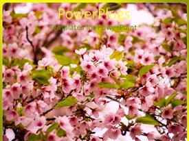 Audience pleasing slide deck featuring pink flowers on blossoming apple tree with green leaves