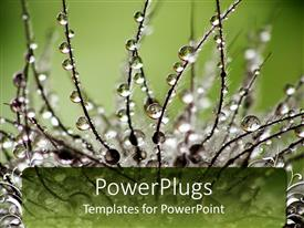 PPT theme enhanced with a plant with dew drops and a greenery in the background