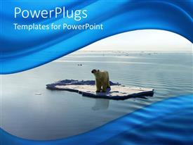 PPT layouts with polar bear on ice piece floating on the water of Arctic sea