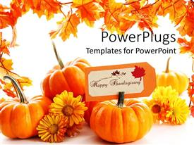 Amazing presentation theme consisting of some pumpkins with yellow flowers on a white background