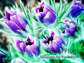 Colorful presentation design having purple flowers with greenery in the background