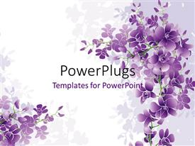 PPT theme having purple orchids blossom with white color