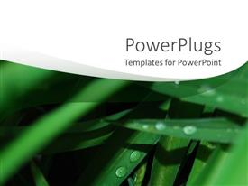 Colorful PPT theme having rain water drops on green leaves and white background