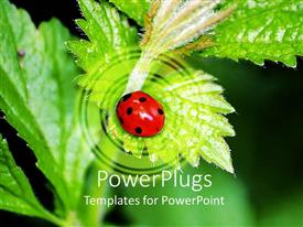 Presentation theme enhanced with red and black lady bird on a green leaf