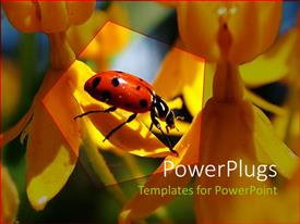 Presentation design with red and black ladybug on petal of yellow orange flower