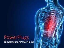 PPT theme featuring red highlighted middle back area of a human spine