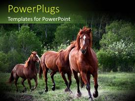 PPT theme enhanced with red horses running in green nature