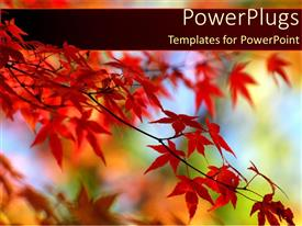 PPT theme with red leaves on orange tree in Autumn with a blue sky