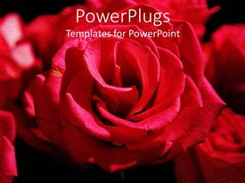 Elegant PPT theme enhanced with red Rose flower bouquet on black surface