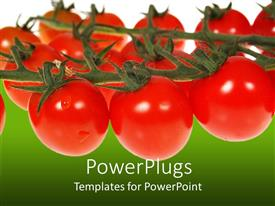Audience pleasing presentation design featuring red tomatoes on vines on white and green background