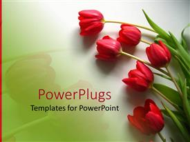 PPT theme enhanced with red tulips with green leaves on light gradient green background and red line on the left side