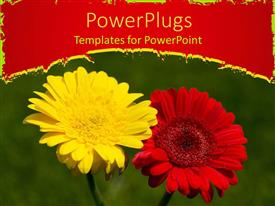 PPT layouts with a red and yellow flower with green background