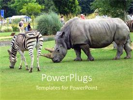5000 zoo zoo powerpoint templates w zoo zoo themed backgrounds audience pleasing ppt theme featuring a rhino along with a zebra toneelgroepblik Image collections