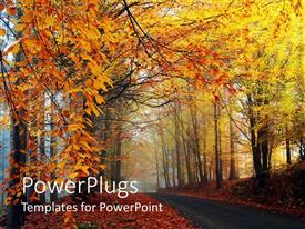 PPT layouts enhanced with road riding through the trees in a forest in autumn, trees with withered leaves, autumn leaves on the ground