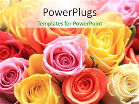 Slide deck consisting of rose bouquet of different colors, red, yellow, pink, cream