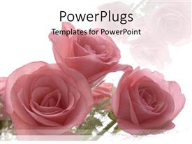 Audience pleasing PPT layouts featuring roses as a metaphor love weddings relationships mother celebrations on a white background
