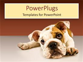 Presentation design consisting of sad puppy eyes dog face on gray ground and gradient brown background