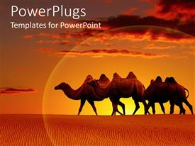 PPT theme featuring scenery of desert with camels walking and beautiful sunset in horizon