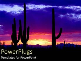Presentation featuring silhouette of cacti cactus at night in desert with sunset pink blue