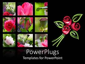 Audience pleasing theme featuring six tiles showing different parts and types of roses