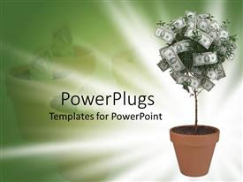 Colorful PPT theme having small moneytree in terra cotta pot on green and white background
