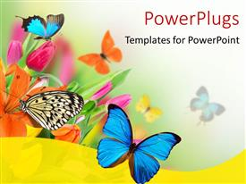 Audience pleasing presentation theme featuring spring flowers with exotic butterflies