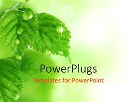 Elegant PPT layouts enhanced with a lot of leaves with blurr background
