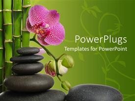 PPT layouts with a stack of smooth pebles with a pink flower