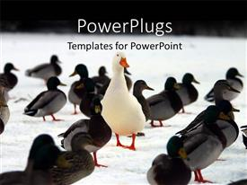 Colorful PPT theme having stand out concept using animals