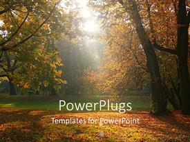 Elegant PPT theme enhanced with sun rays shining through trees on typical afternoon fall time