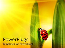 Elegant PPT theme enhanced with sun shining on ladybug climbing a leaf