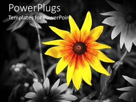 Presentation design having a sunflower with black and white flowers in the background
