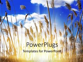 5000 agriculture powerpoint templates w agriculture themed backgrounds elegant ppt theme enhanced with sunlight filtering through dense growth of tall grasses toneelgroepblik Gallery