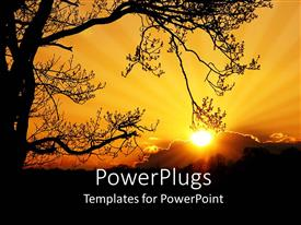 Elegant PPT theme enhanced with sunset depiction with large tree and sun behind clouds