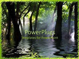 PPT layouts having swamp marsh trees dark water fog sun shining through