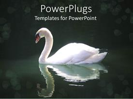 PPT layouts featuring swan swimming in dark pool of water with reflection in water