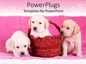 Presentation theme having three fluffy puppies with one in a red basket