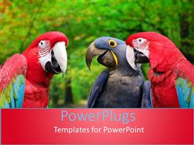 Audience pleasing PPT layouts featuring three red and blue colorful parrots over blurred trees with green leaves in the background
